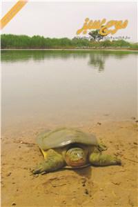 نسخه دیجیتالی کتاب فصلنامه موج سبز سال شانزدهم - شماره 60 - بهار و تابستان 1398